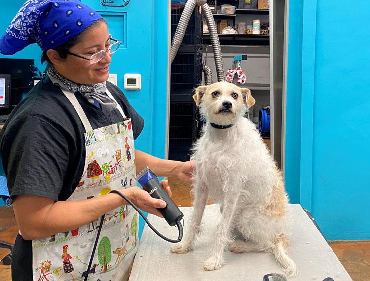 Reni-getting-groomed