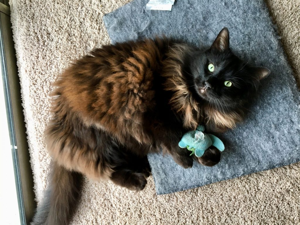 cat curled up with catnip toy