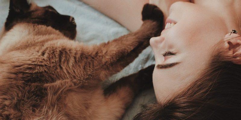 A friendly cat.